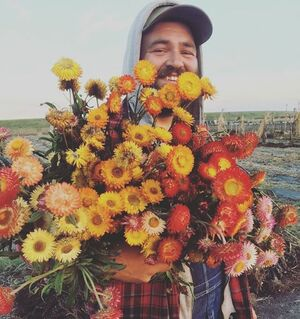 Farmer Kenny collecting the last of the strawflower before the frosts #firstgenerationfarmers #damnitfeelsgoodtobeafarmer #dontpanicitsorganic #farmlove #strawflower #cutflowers