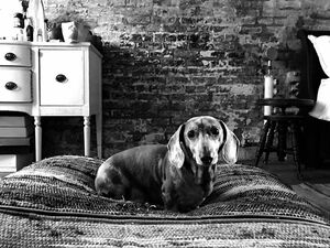 Perks of having a film being shot in your house.. they take cute pics of your dog for you!!! #atlas #myshadow #monstro ⭐️